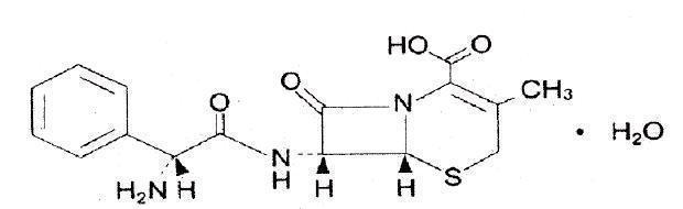 cephalexin (cephalexin)